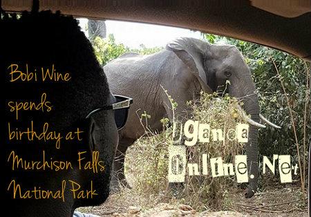 Bobi Wine drives past an Elephant a Murchison Falls NP