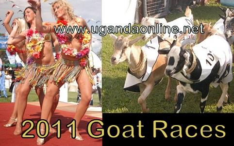 The 2011 Royal Ascot Goat Races