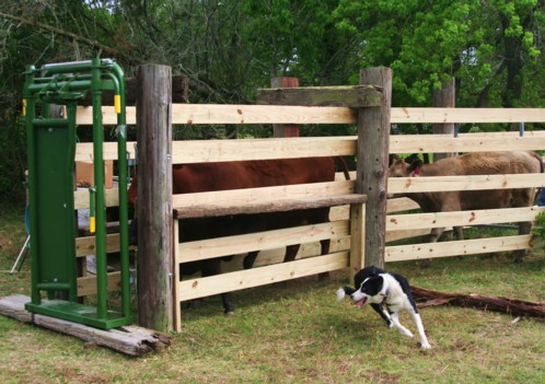 Cattle Head Gate Plans Plans DIY Free Download 18 Doll ...